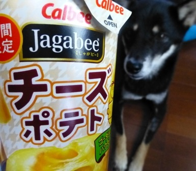 Jagabeeチーズポテト4