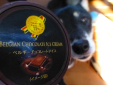 ベルギーチョコレートアイス2