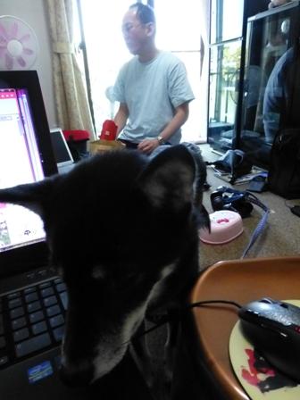 愛犬の床施工7