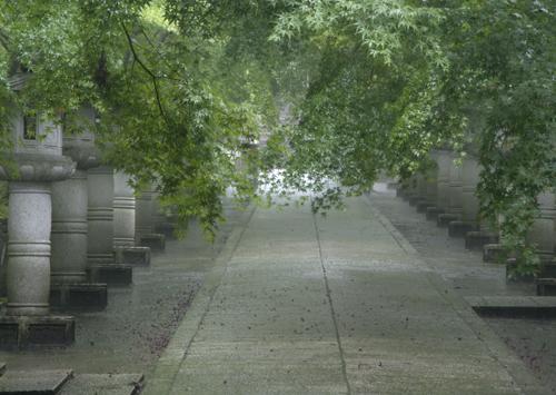 雨の参道1