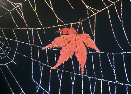蜘蛛の巣3