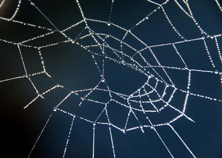 蜘蛛の巣5