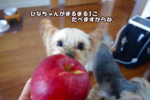岩手のリンゴ⑤