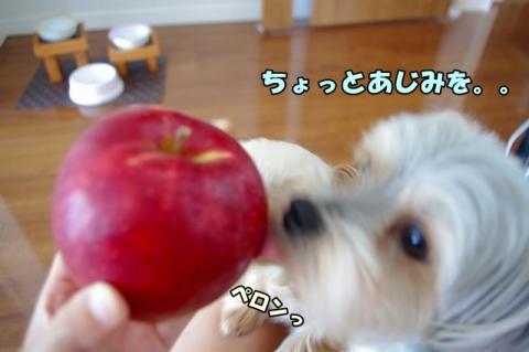 岩手のリンゴ③