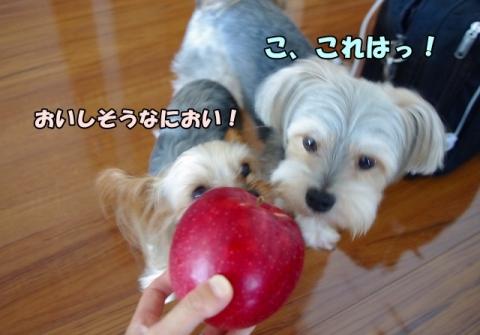 岩手のリンゴ②