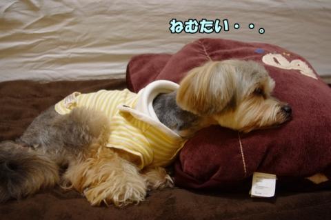 眠たいんだ。。①