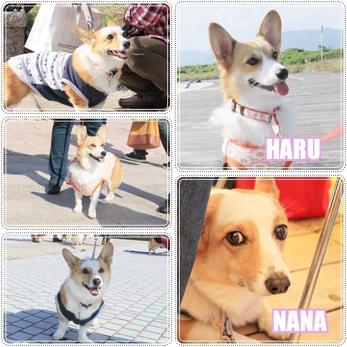 NANAちゃん&ハルちゃん