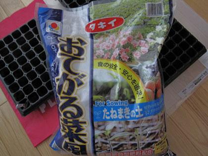 パンジー種蒔き1