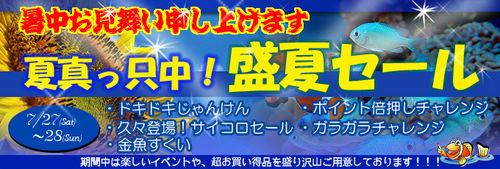 banner_summer.jpg