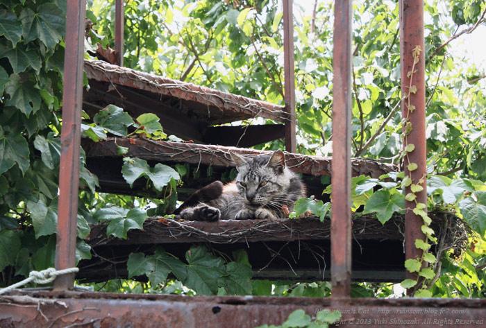 Ruin's Cat ~陽光の降り注ぐ螺旋階段~