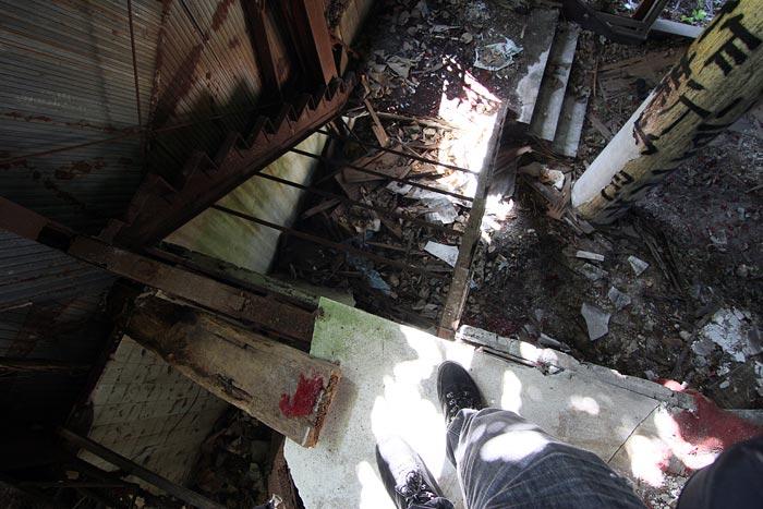 IMG_8057_ruinscat.jpg