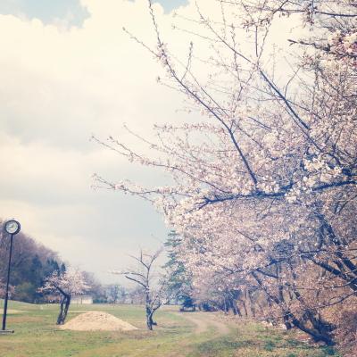 小田山公園の桜_2013/04/22