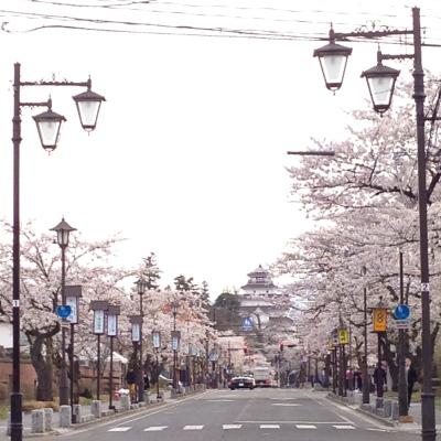 北出丸通りの桜並木と鶴ヶ城天守閣の眺め