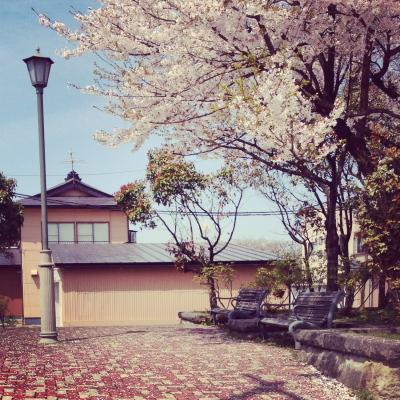 葉桜なり始め(2013年4月25日、会津若松市内)