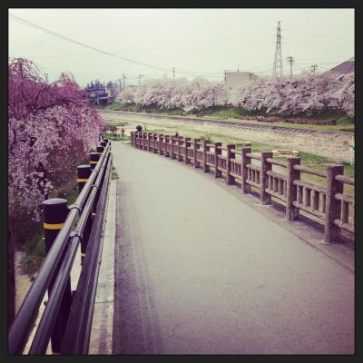湯川いこいの河畔公園の桜並木