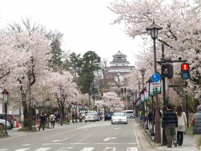 北出丸通りの桜並木_2013/04/20