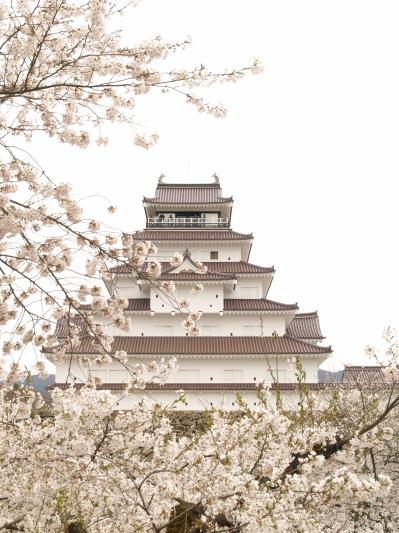 鶴ヶ城天守閣と桜_2013/04/20
