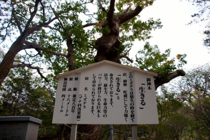 blog-DSC00275.jpg