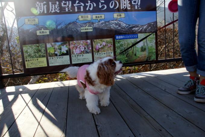 blog-DSC09811.jpg