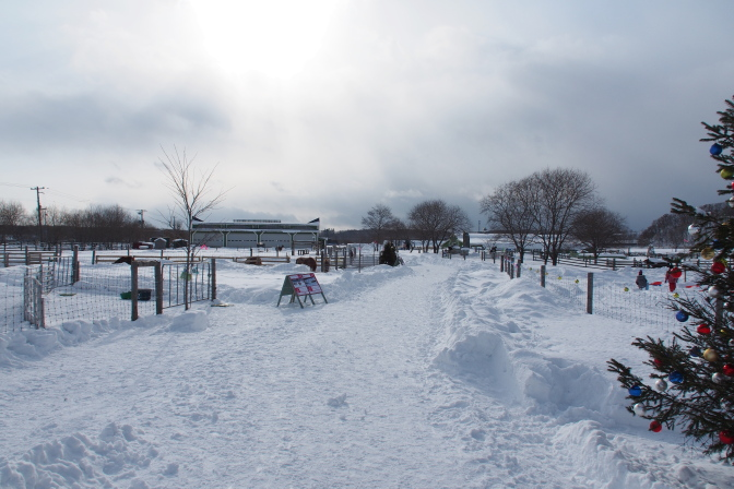 雪のどうぶつ広場