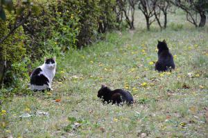 日比谷公園の三匹の野良猫