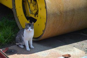 桜猫 Sakura Cat Mechanic