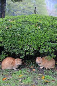 Cats Sheltering From The Rain