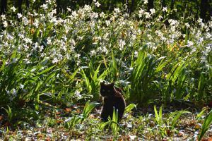 Cat & Iris japonica