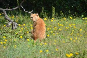 Cat & Dandelions