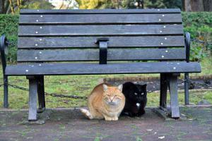 Cats Under Bench