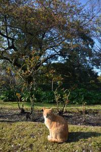 Cat Under Sakura Tree