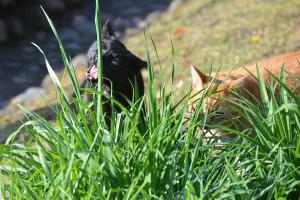 Cats Tasing New Grass