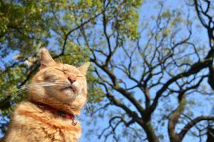 Blue Sky Cat