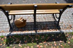 Drowsy Cat
