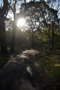 Cat - Sunshine Through The Trees