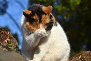 Cat Washing in the Sun