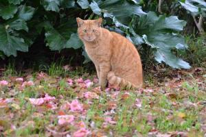 Cat & Pink Flower Petals