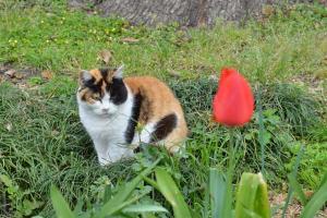Cat & Lone Tulip