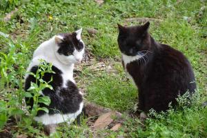 Together Cats Looking Behind
