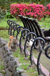 Bench Cats (1/10)