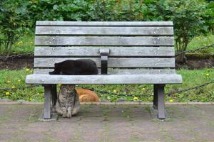 Bench Cats (2/10)
