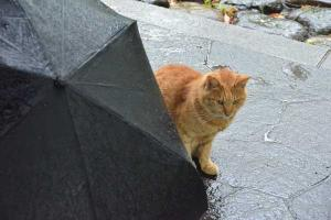 Cat - Rainy Day