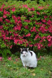 Cat & Rain Washed Azaleas