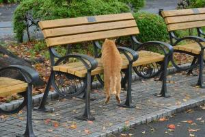 Cat Getting On Bench