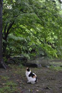 Sakura-chan The Cat Watching Out