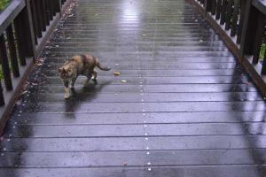 Nemesis Cat Crossing Bridge