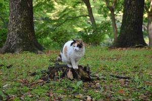 Sakura-chan The Cat On Tree Stump