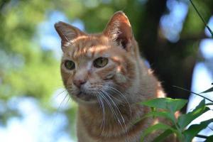 鴨を見ている猫 日比谷公園