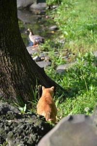 鴨と猫 日比谷公園