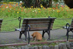 Ai-chan The Cat Under Bench